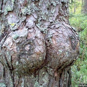 naughtytree-18-300x300 Very naughty trees