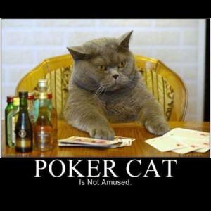 cat_demotivators-01-300x300 Cat demotivators